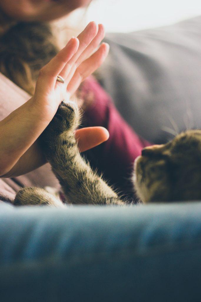 Toucher un animal détend.  Encore faut il aimer les animaux !